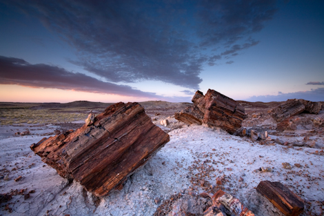 225-million-year-old trees, Petrified Forest National Park, Arizona. ©Ian Shive