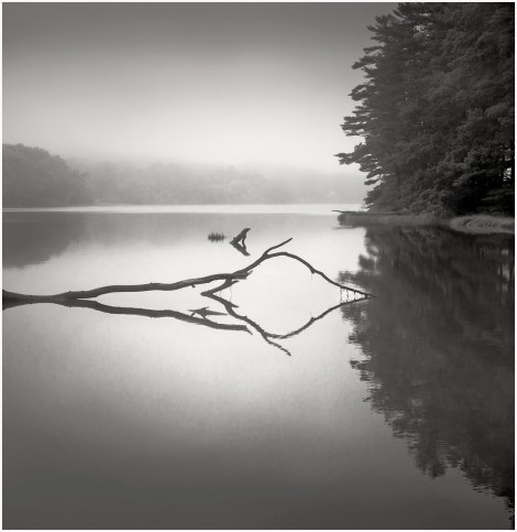 Reflection and Fog